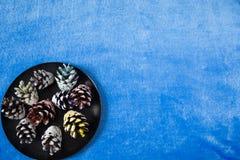 Pinecones del color en fondo azul Fotografía de archivo