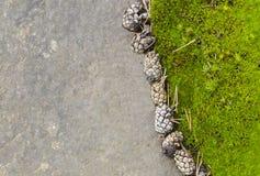 Pinecones dichtbij groen mos op steenachtergrond Stock Foto