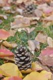 Pinecones en hojas de otoño hermosas Imagenes de archivo
