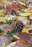 Pinecones en hojas de otoño hermosas Foto de archivo