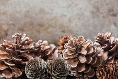 Pinecones with Grunge Background Royalty Free Stock Photos
