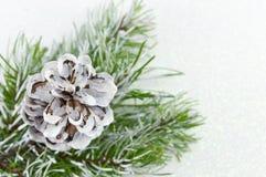 Pinecones i jedlinowy drzewo na iskrzastym tle Obraz Royalty Free
