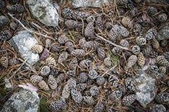 Pinecones i kamienie na ziemi w naturze Fotografia Stock