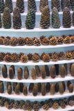 Pinecones Stock Photo