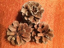 3 pinecones on orange fabric. Three brown pine cones detail on shimmery orange tablecloth in fall autumn harvest decoration Stock Images