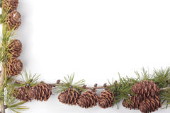 Pinecones over white Stock Photos