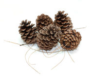 Pinecones and Pine Needles on White Royalty Free Stock Photos