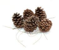 Pinecones and Pine Needles on White. Pinecones and pine needles on a white background royalty free stock photos