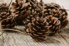 Pinecones royalty free stock image