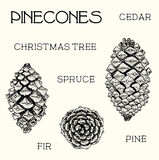 Pinecones set. Cedar, christmas tree, fir, pine, hand-drawn illustration Royalty Free Stock Image