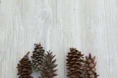 Pinecones som lägger på en träbakgrund Arkivbild