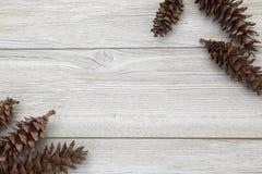 Pinecones som lägger på en träbakgrund arkivbilder