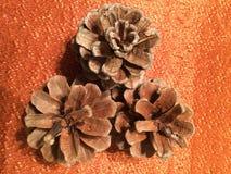3 pinecones su tessuto arancio Immagini Stock