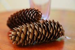 pinecones två Fotografering för Bildbyråer