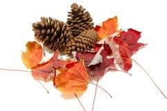 Pinecones und Fall-Ahornblätter Stockbild