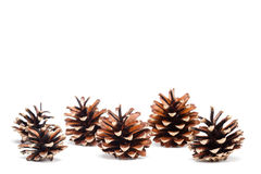 Pinecones on white background Royalty Free Stock Photography