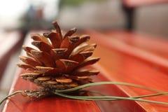 Pinecones y bancos foto de archivo libre de regalías