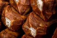 Pineconeschalen Stock Afbeeldingen