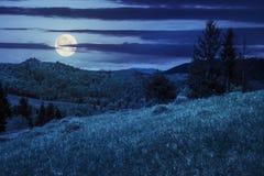 Pineforest sur une pente de montagne la nuit Photographie stock libre de droits