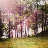 Pinegarden стоковое фото rf