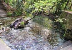Pineos rzeka Grecja - tempo dolina - Zdjęcie Royalty Free