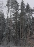 Pinery Стоковое фото RF