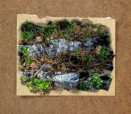 Pinery forest landscape, through pine needles on the ground peep Stock Image