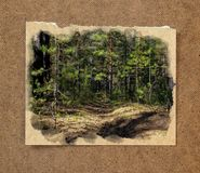 Pinery forest landscape, through pine needles on the ground peep. Berries and mushrooms, low bushes. Russian watercolor landscape painting on paper with a torn Stock Photo