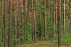 Pinery Stock Image