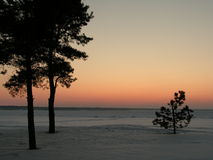 Pines. Wintry view from the snowy beach Royalty Free Stock Photos