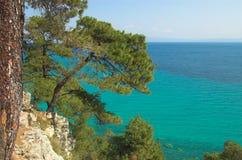 Pines above the sea. Halkidiki, Greece Royalty Free Stock Photos