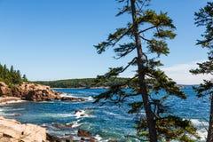 Pines Along Rocky Coast By Blue Sea Stock Image