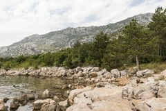 Pines on the beach. Capped mountains can be seen from the banks of a mountain river Royalty Free Stock Images