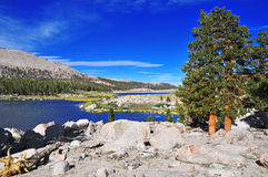 Pines and Blue skies, Sierra Nevada Mountains Stock Photography