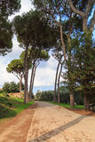 Pines on Capitol Hill in Rome. Vertical shot Royalty Free Stock Images
