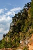 Pines on a cliff in Durmitor, Montenegro stock images