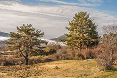 Pines and clouds in LA BARRANCA Spain. Pines and clouds in the sierra of guadarrama in the place called LA BARRANCA Spain Royalty Free Stock Photos