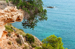 Pines on the  Costa Blanca, Spain Stock Images