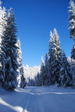 Pines covered frozen snow. Mountain and pines covered with snow Stock Image