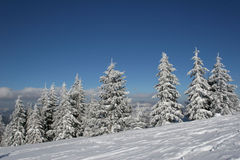Pines covered snow on the hill royalty free stock photo