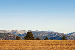 Pines on the Crest of a Hill With a View. Pines dot the crest of a hill with a view of hazy mountains beyond, in Colorado near Boulder Stock Photo