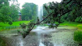 Pines in Czestochowa park, Poland. The view on fountain in Stanislaw Staszic Park at Jasna Gora Monastery through the branch of pine tree with shiny raindrops on stock video