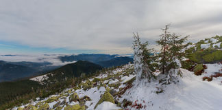 Pines and gorgan covered with snow at the top of the mountain Royalty Free Stock Photo