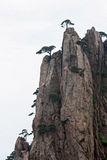 Pines groiwng from vertical rock in Huang Shan mountains,China Royalty Free Stock Image