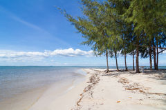 Pines on  Laem klat beach in Trat province, Thailand Royalty Free Stock Photos