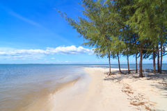 Pines on  Laem klat beach in Trat province, Thailand Stock Images