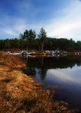 Pines at the Lake Stock Photos