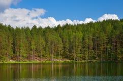 Pines on lake Stock Photo