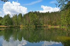 Pines on lake Royalty Free Stock Image