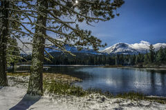 Pines and Lassen Peak after snow storm, Manzanita Lake, Lassen Volcanic National Park Stock Photography